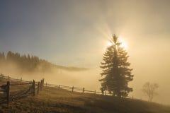 在山的美好的有薄雾的黎明 喀尔巴阡山脉的山顶视图 库存照片