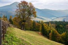 在山的美好的秋天横向 免版税库存图片