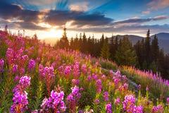 在山的美好的秋天风景与桃红色花 免版税库存照片