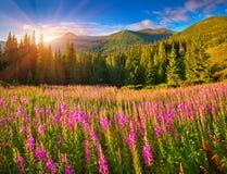 在山的美好的秋天风景与桃红色花 库存照片