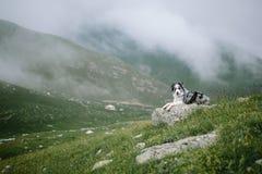 在山的美好的风景与博德牧羊犬狗 免版税库存图片