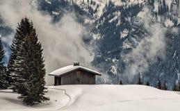 在山的老木cabine 库存图片