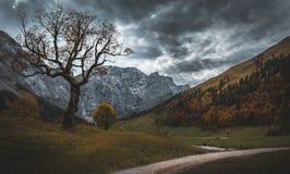 在山的老神秘的树 图库摄影