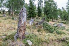 在山的老腐烂的树干 库存照片