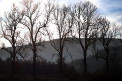在山的背景的干树在一个晴天, a 免版税图库摄影