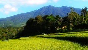 在山的自然风景在一个晴朗的早晨和适用于墙纸 库存照片