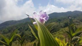 在山的花 库存照片