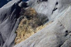 在山的茅根 库存照片