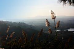 在山的草花与一个新大气早晨 免版税库存图片