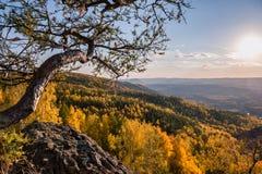 在山的落叶松属树 免版税图库摄影