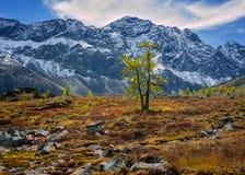 在山的落叶松属 免版税图库摄影