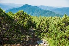 在山的路径 库存图片