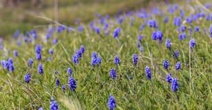 在山的野花在拉赫季附近村庄  库存图片