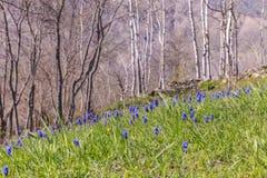 在山的野花在拉赫季附近村庄  图库摄影