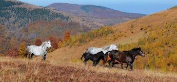 在山的野马 免版税库存图片