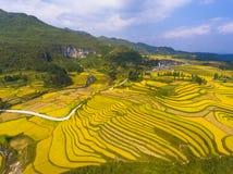 在山的金黄米领域 免版税库存图片