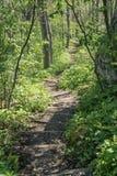 在山的阿巴拉契亚足迹 免版税库存图片