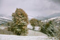 在山的降雪 在一棵绿色树的雪 免版税图库摄影