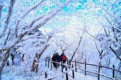 在山的雪花 免版税库存照片