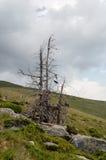 在山的风景与树和云彩 库存图片