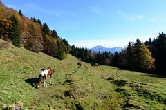 在山的马吃草对秋天的季节 免版税库存照片