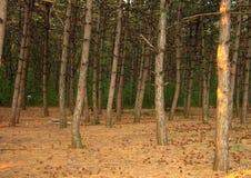 在山的马舒克痛苦森林里 五山城,俄罗斯 库存图片