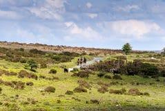 在山的马骑术 免版税库存照片
