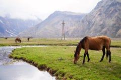 在山的马 免版税库存图片