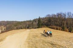 在山的骑马旅行 库存照片