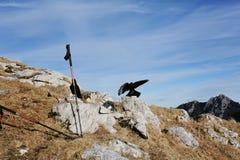 在山的鸟 免版税库存图片