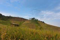 在山的麦地 免版税图库摄影