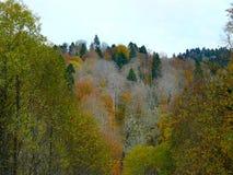 在山的黄绿秋天 免版税库存图片