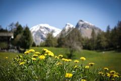 在山的黄色花 免版税库存图片