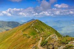 在山的晴朗的夏天场面 图库摄影