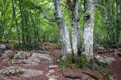 在山的结构树 免版税图库摄影