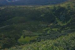 在山的绿色自然样式 免版税库存照片