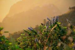 在山的紫色花 免版税库存图片