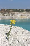 在山的黄色野花 库存图片