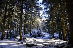 在山的Forrest在卑尔根,挪威 图库摄影