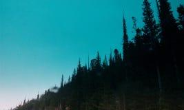 在山的Forrest 图库摄影
