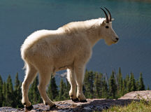 在山羊之上隐藏的湖山 免版税库存照片