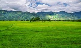 在山背景的米领域  免版税库存图片