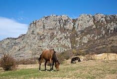 在山背景的马  免版税库存图片