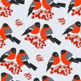在山脉灰分支的红腹灰雀  无缝的模式 图库摄影