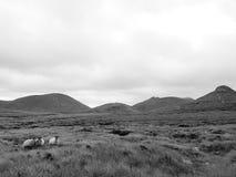 在山脉的绵羊 库存照片