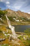 在山脉的绿叶 库存照片