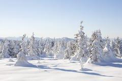 在山脉Zyuratkul的积雪的云杉 冬天landsca 免版税库存照片