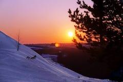 在山腰的冬天风景 在日落 森林在背景中 在前景的圣诞树 图库摄影