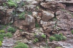 在山腰的几棵绿色树 免版税图库摄影