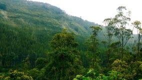 在山腰的树 库存照片